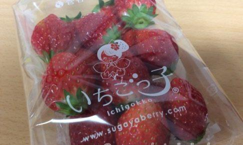 らでぃっしゅぼーや 食育 イチゴ 野菜 ぱれっと お試しセット 評判 口コミ 体験談