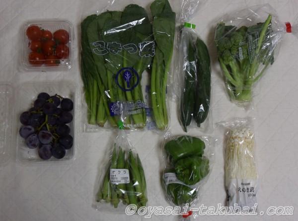 らでぃっしゅぼーや ぱれっと 野菜 果物 安全性 留め置き方法 保冷